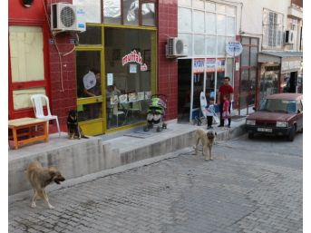 Mut'ta Başıboş Sokak Köpekleri Toplanıyor