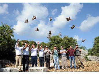 Kınalı Keklikler Doğayla Buluştu