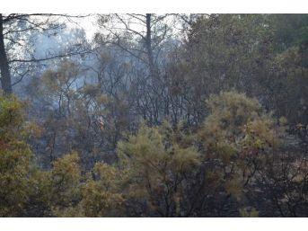 Dalaman'da Mevsimin İlk Orman Yangını