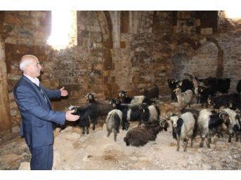 1500 Yıllık Tarihi Manastır Ahır Oldu