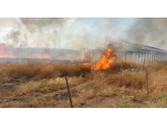 Anız Yangını Palmiye Fidanlarını Yaktı