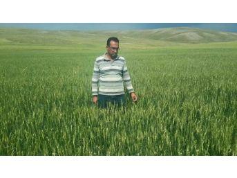 İç Anadolu Tarım Ambarında Net Bilanço Açığa Çıktı