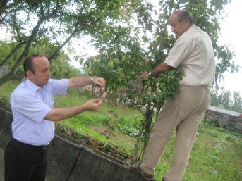Düzce'de Amerikan Beyaz Kelebeğine Karşı İlaçlı Mücadele