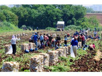Prof. Dr. Gülçubuk: Türkiye'de 1 Milyonun Üzerinde Gezici Tarım Işçisi Var