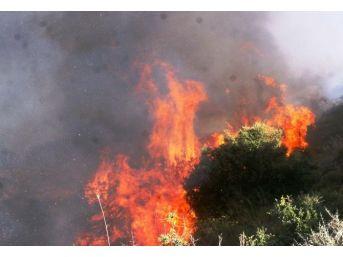 Aydın Orman Yangınlarına Hazır
