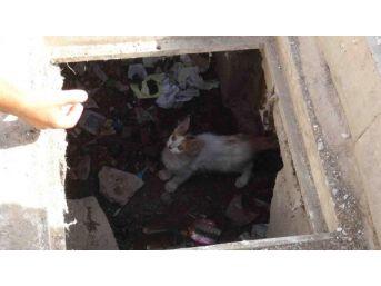Nusaybin'de Kanalizyasyonda 4 Gün Mahsur Kalan Yavru Kedi Kurtarıldı