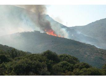 Bodrum'daki Yangın Mahallelere Sıçradı