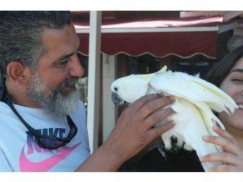 Kaybolan Papağanına 2 Gün Sonra Kavuştu