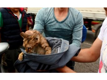 Motora Sıkışan Kedi Kurtarıldı