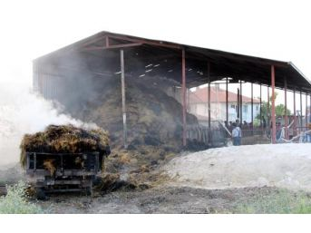 Yangının Ortasında Kalan Kediyi Itfaiye Kurtardı