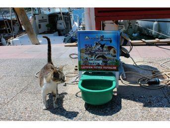 Foça'da Can Dostlara Özel Su Kabı