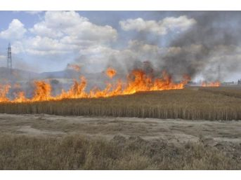 50 Hektarlık Buğday Tarlası Yandı