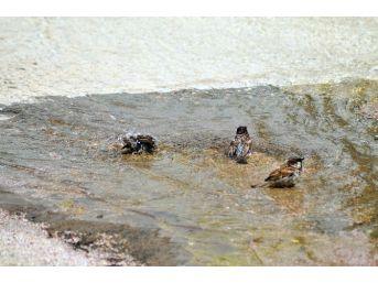 (özel Haber) Kuşların Akşehir Deresinde Banyo Keyfi