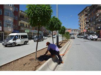 Hakkari'de Ağaç Sulama Çalışması