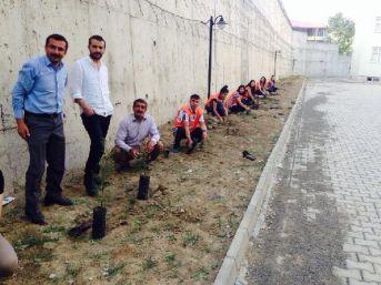 Yüksekova'da Öğretmenler Okul Bahçesine 200 Çam Fidanı Dikti