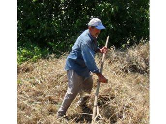 Eğimli Arazideki Buğdaylar Kosayla Biçiliyor
