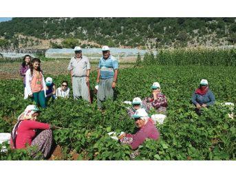 Çiftçi Tarım Danışmanlığı Sistemini Sevdi