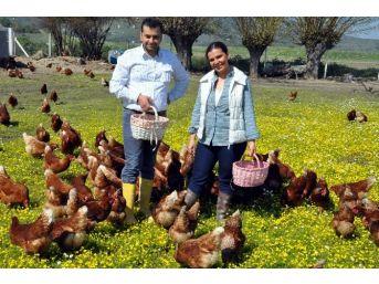 Doğal Ortamda Tavuk Çiftliği Kurdular