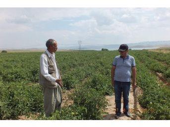 Tso'dan Endüstriyel Tarıma Destek