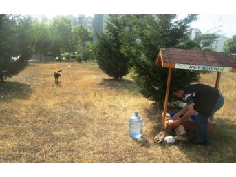 İzmit'te Sokak Hayvanları, Aç-susuz Kalmıyor