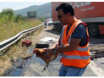 Tır Emniyet Şeridindeki Tavuk Yüklü Kamyonete Çarptı, Onlarca Tavuk Tem'e Saçıldı.