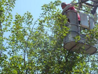Ağaca Takılan Kuşa Kurtarma Operasyonu