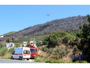 Alanya'da Orman Yangını (2) - Yeniden