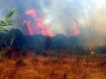 Antalya'da Tarım Arazisinde Yangın