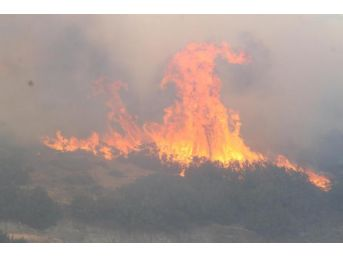Alevler, Ayvalık'ta 12 Hektar Makiyi Küle Çevirdi