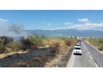 Yol Kenarında Başlayan Yangın Sazlığı Yaktı