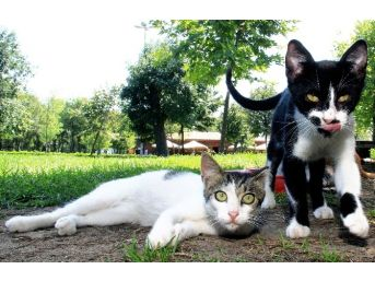 Kağıthane Belediyesi Sokak Hayvanlarını Unutmadı