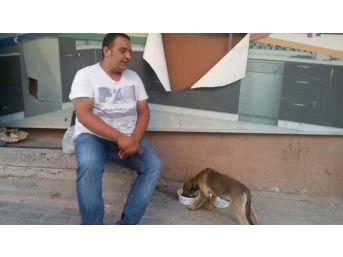Büyükşehir'den Sokak Hayvanları İçin Anlamlı Proje