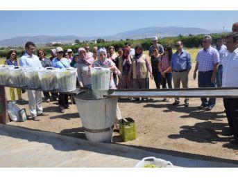 Alaşehirli Kadın Çiftçiler Bağcılık Eğitiminde Buluştu
