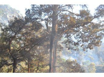 Anamur'daki Orman Yangınını Söndürme Çalışmaları Sürüyor