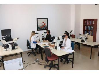 Bülent Ecevit Üniversitesi, Tıbbi Patoloji Alanında Da Fark Attı