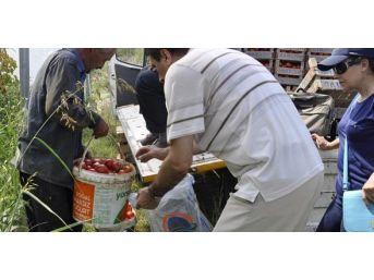Gıda Kontrolörlerinden Zirai İlaç Kalıntısı Denetimi