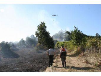 Düzce'de 25 Hektar Orman Yandı