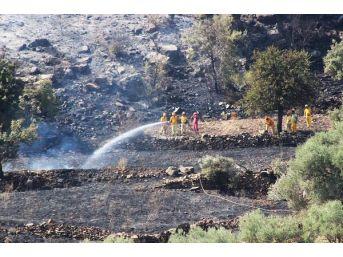 Anız Ateşi Tarım Arazileri Ve Ormanı Yaktı