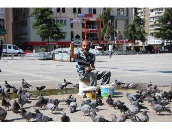 Yuvasız Kuşların Nazım Babası