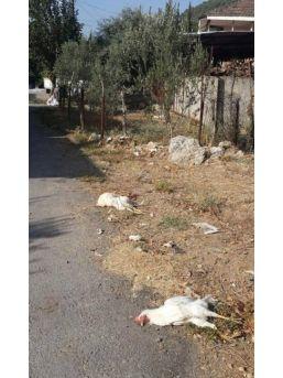 Döşemealtı'nda Şüpheli Hayvan Ölümleri