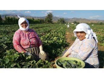 Tarım İşçilerinin Bayramı Yok