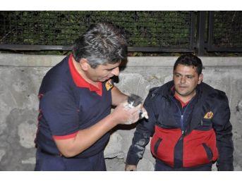 (özel Haber) Bahçe Duvarına Sıkışan Kediyi İtfaiye Kurtardı