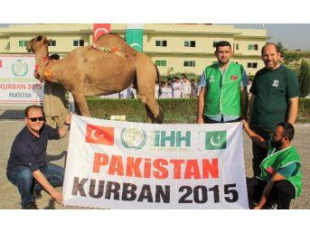Bursa İhh Pakistan'da 400 Büyükbaş Kurban Kesti