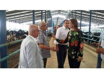 """İzmirli Süt Üreticisinin Primleri Yatırıldı; Rakam """"15 Milyon"""""""