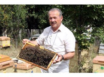 Kastamonu Arı Yetiştiricileri Birliği Ahmet Erden;