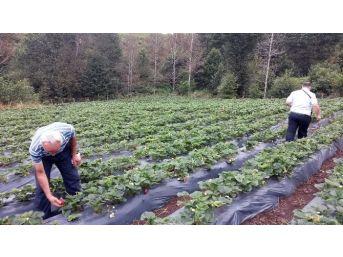 Ordu'da Organik Tarım Ve İyi Tarım Destekleme Ödemeleri Başladı