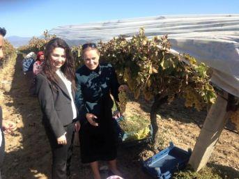 Ak Partili Kozan Sarıgöl'ün Üzüm Bağlarına Hayran Kaldı