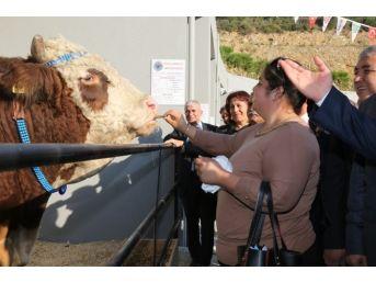Anadolu Expo 2. Canlı Hayvan Fuarı Devam Ediyor