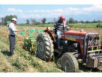 Tüik, Ödemiş'te Tarımsal Yapının Röntgenini Çekiyor