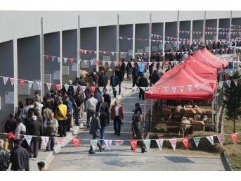 Anadolu Expo Canlı Hayvan Fuarında Satış Rekoru Kırıldı